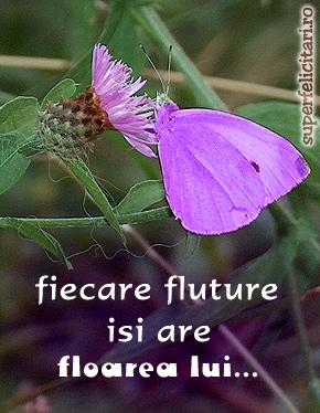 Fiecare fluture...